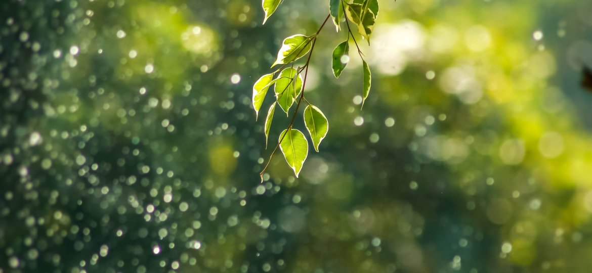 Fresh greenery with water droplets in the sun