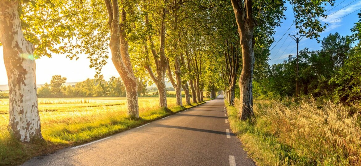 Sunlit road lined by trees