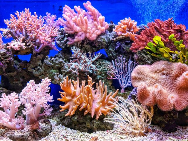 A group of bright coral